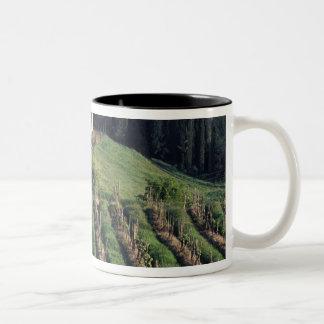 ヨーロッパ、イタリア、タスカニー。 景色の別荘キプロス ツートーンマグカップ