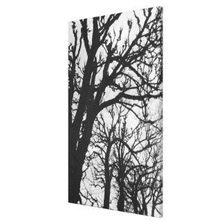ヨーロッパ、フランス、パリ。 冬の木、Marco キャンバスプリント