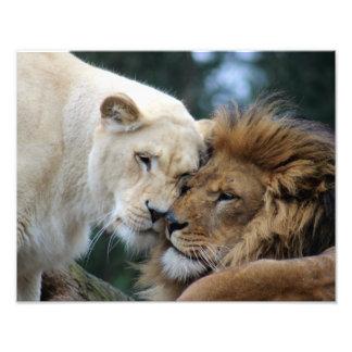 ライオンおよび雌ジシ フォトプリント