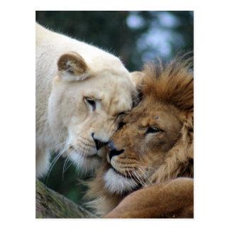 ライオンおよび雌ジシ ポストカード