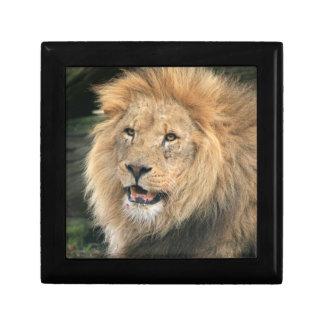 ライオンのヘッド男性の美しい写真の宝石箱 ギフトボックス