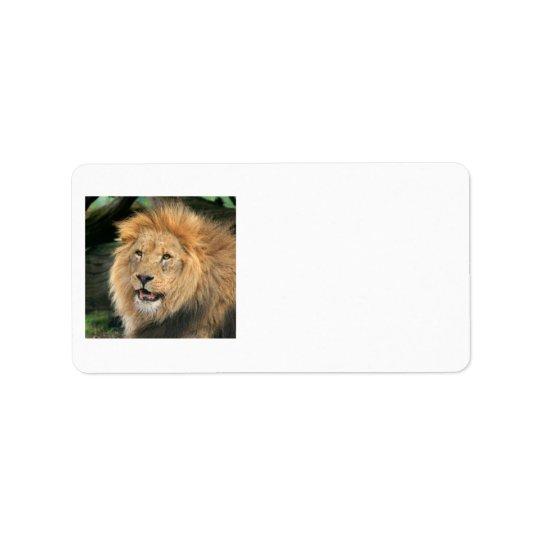 ライオンのヘッド美しい男性の写真のアドレス・ラベル 宛名ラベル