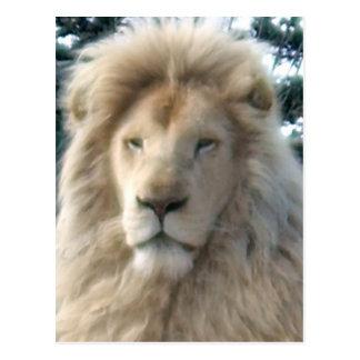 ライオンのヘッド郵便はがき ポストカード
