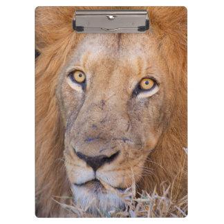 ライオンのポートレート クリップボード