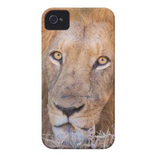 ライオンのポートレート Case-Mate iPhone 4 ケース