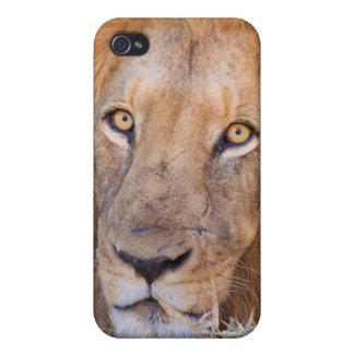 ライオンのポートレート iPhone 4/4Sケース