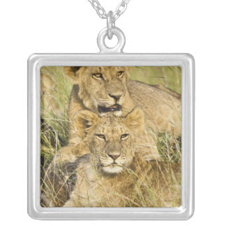 ライオンの子のグループ、ヒョウ属レオ、マサイ語マラ、 シルバープレートネックレス