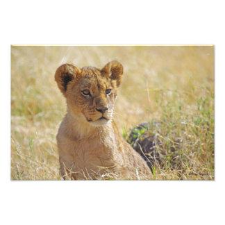 ライオンの子1つの写真 フォトプリント