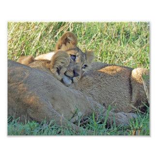 ライオンの子27 フォトプリント