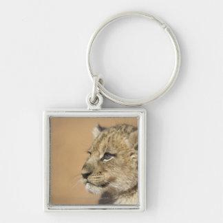 ライオンの子(ヒョウ属レオ)のポートレート、ナミビア キーホルダー
