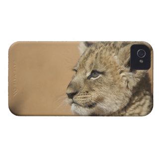 ライオンの子(ヒョウ属レオ)のポートレート、ナミビア Case-Mate iPhone 4 ケース