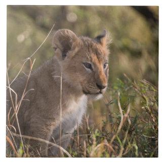 ライオンの子(ヒョウ属レオ)、マサイ族のマラの国民 タイル