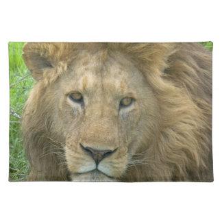 ライオンの男性のポートレート、東アフリカ、タンザニア、 ランチョンマット