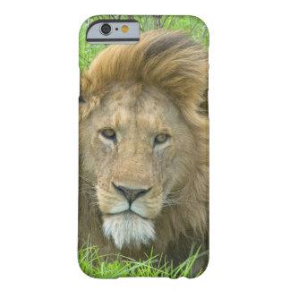 ライオンの男性のポートレート、東アフリカ、タンザニア、 BARELY THERE iPhone 6 ケース
