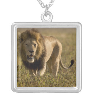 ライオンの男性の狩り シルバープレートネックレス