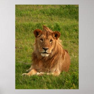 ライオンの目 ポスター
