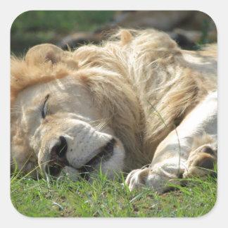 ライオンの睡眠 スクエアシール