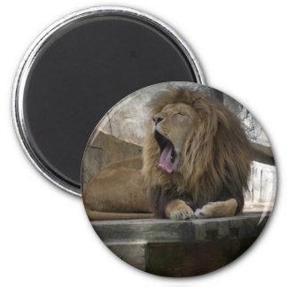ライオンの睡眠 マグネット