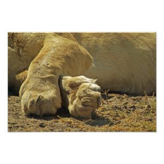 ライオンの足 フォトプリント