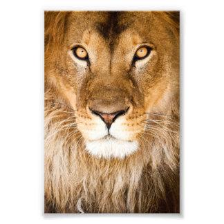 ライオンの顔のクローズアップ フォトプリント
