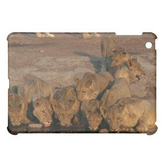 ライオンの飲むことのプライド iPad MINI CASE
