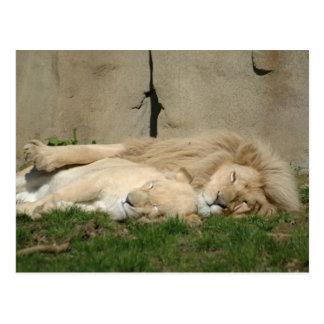 ライオンはあなたの腕で今夜眠ります ポストカード