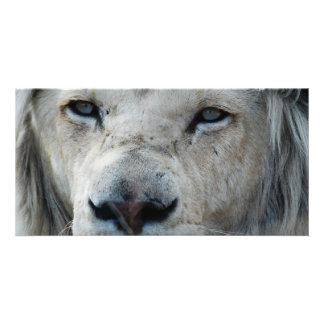 ライオンは私の心拍アフリカに聞きます カード