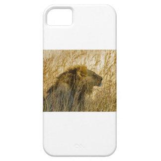 ライオンは、ジンバブエアフリカ待っています iPhone SE/5/5s ケース