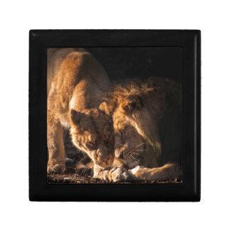 ライオン愛 ギフトボックス