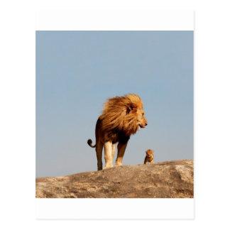 ライオン王(大人のライオンおよびカブス) ポストカード