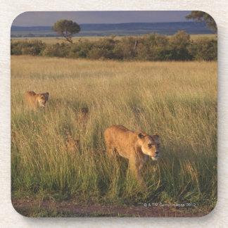 ライオン2 コースター