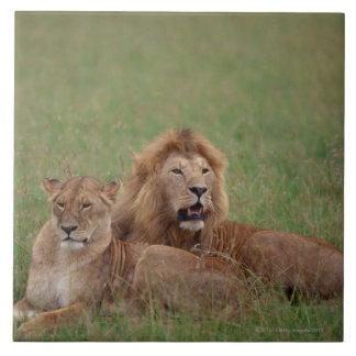 ライオン2 タイル