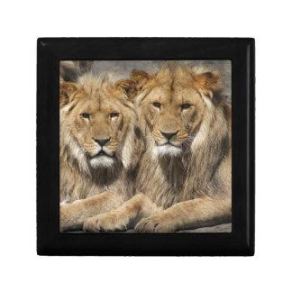 ライオン ギフトボックス