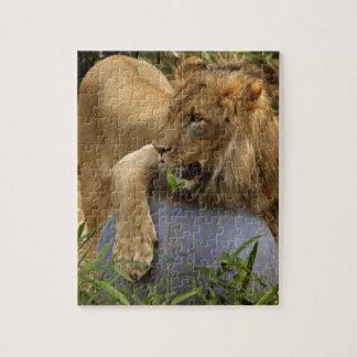 ライオン パズル