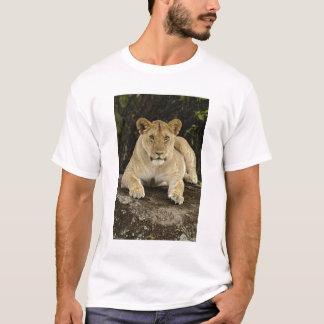 ライオン、ヒョウ属レオのSerengetiの国立公園、 Tシャツ