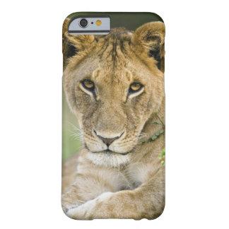 ライオン、ヒョウ属レオ、マサイ語マラ、ケニヤ BARELY THERE iPhone 6 ケース