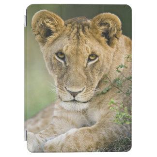 ライオン、ヒョウ属レオ、マサイ語マラ、ケニヤ iPad AIR カバー