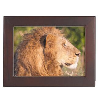 ライオン(ヒョウ属レオ) Maasaiマラ、ケニヤ、アフリカ ジュエリーボックス