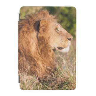 ライオン(ヒョウ属レオ) Maasaiマラ、ケニヤ、アフリカ iPad Miniカバー