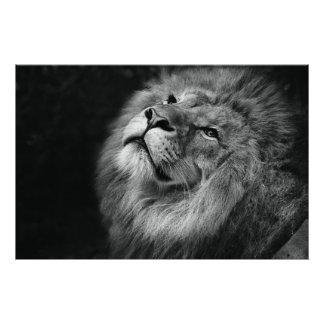 ライオン フォトプリント