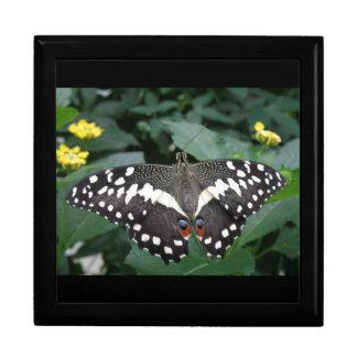 ライムの蝶および花のギフト用の箱 ギフトボックス
