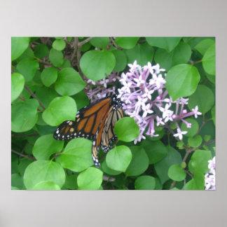 ライラックの蝶 ポスター