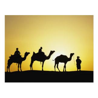 ラクダおよび日没、2でシルエットを描かれるラクダの運転者 ポストカード