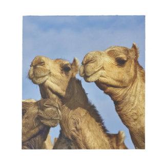 ラクダのトリオ、ラクダの市場、カイロ、エジプト ノートパッド