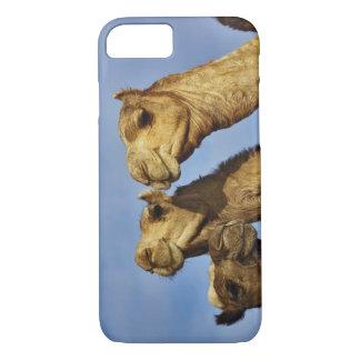 ラクダのトリオ、ラクダの市場、カイロ、エジプト iPhone 8/7ケース