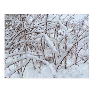ラズベリーパッチの雪 --- ポストカード