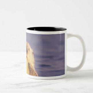 ラッコ、Enhydraのlutris 5 ツートーンマグカップ