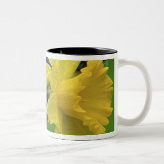 ラッパスイセンおよびhyacinthの花の詳細。 信用 ツートーンマグカップ