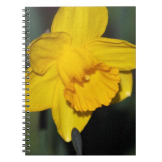ラッパスイセンの花 ノートブック