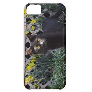 ラッパスイセンのiPhone 5の場合の黒猫 iPhone5Cケース
